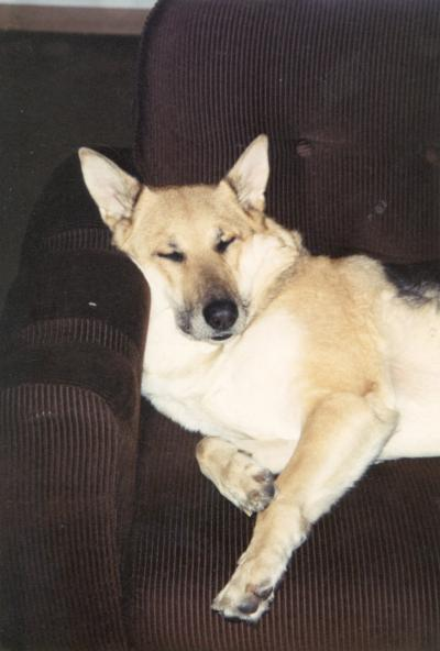 Asti Spumante, mit ihr bin ich aufgewachsen. Sie wurde fast 15 Jahre alt und mußte wegen einem Tumor eingeschläfert werden. Sie ist im Hundehimmel.