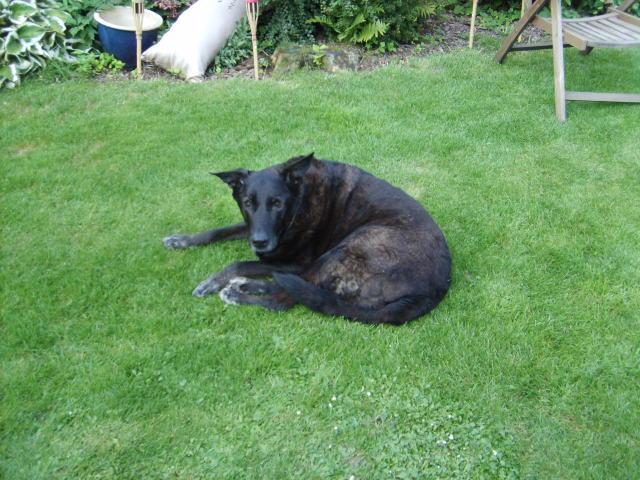 Ben unser Hofhund verstarb am 24.04.08 im hohen Alter. Wir werden dich nicht vergessen.