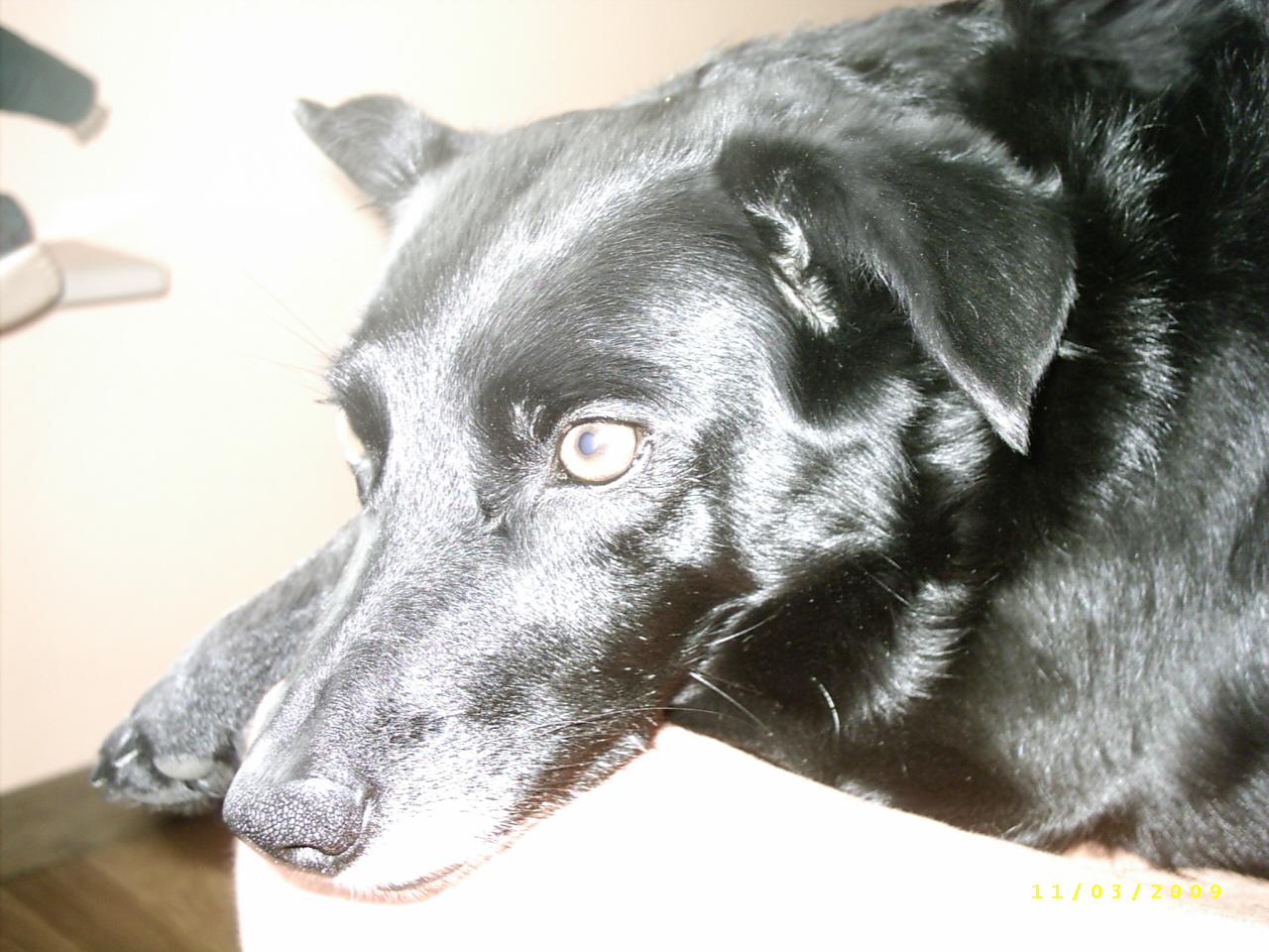 Duggy, heute 2009