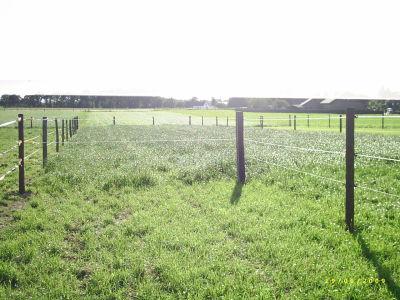 Und noch mehr Weide links und rechts und dahinter und könnte noch bis zum Wald hinten erweitert werden