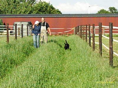 Gang zwischen Stuten und Wallachen, kein krieg an den Zäunen und der Weg zu den Weiden