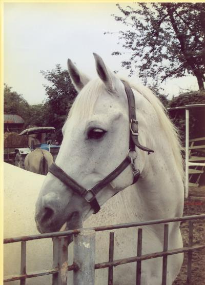 Cheyenne, wurde stolze 24 Jahre alt, er war einer meiner besten Kumpels, ich werde ihn nie vergessen