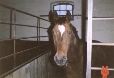Agave, genannt Puppa, ist im Pferdehimmel, Sie wurde nur 14 Jahre alt. Sie mußte eingeschläfert werden, wegen einem Oberschenkelbruch, da der damalige Stallbesitzer der Meinung war, elf Suten auf den Reitplatz zustellen mit einer riesigen tiefgefrorenen Pfütze.