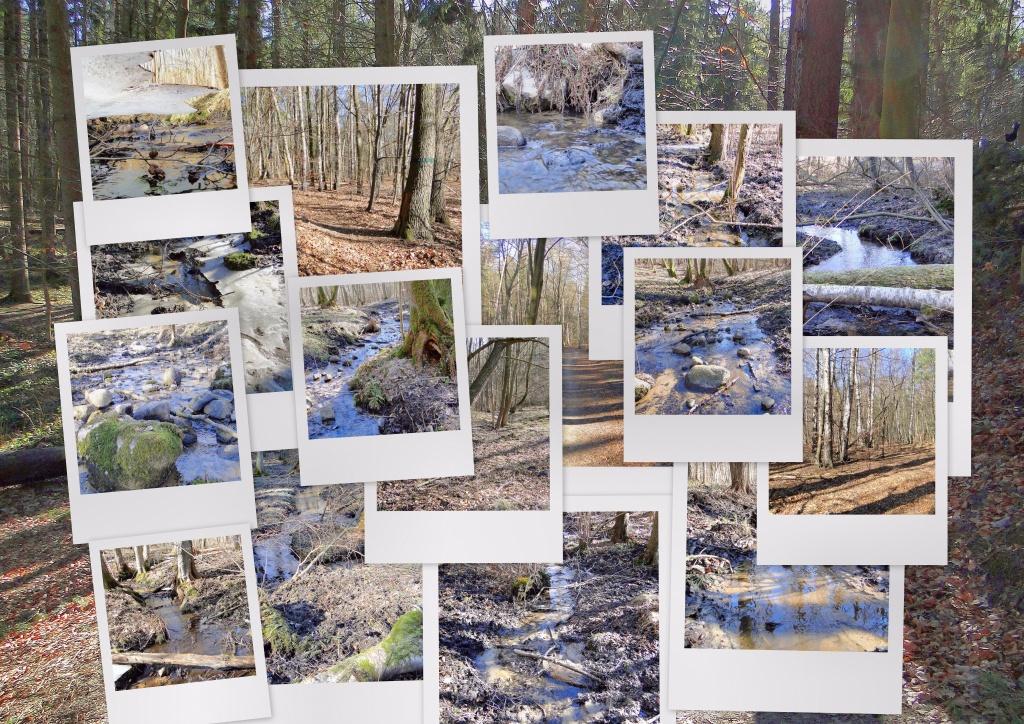 Rezerwat przyrody Łęg nad Swelinią