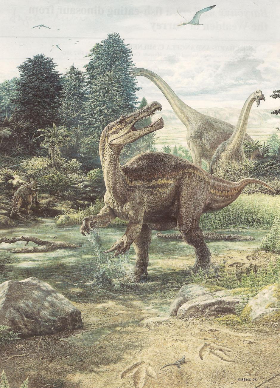 spinosauridae dessin de baryonyx john sibbick