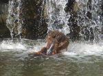 foto hipopotam w wodzie