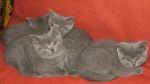 foto koteczki
