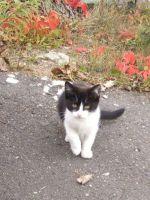 kotek jesienią