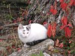 foto kotek jesienią