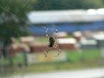 foto pająk