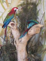 foto papugi