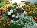 piesek w kwiatach
