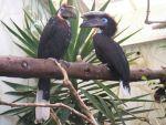 foto ptaki