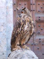 foto w Sienie