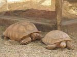 foto żółwie