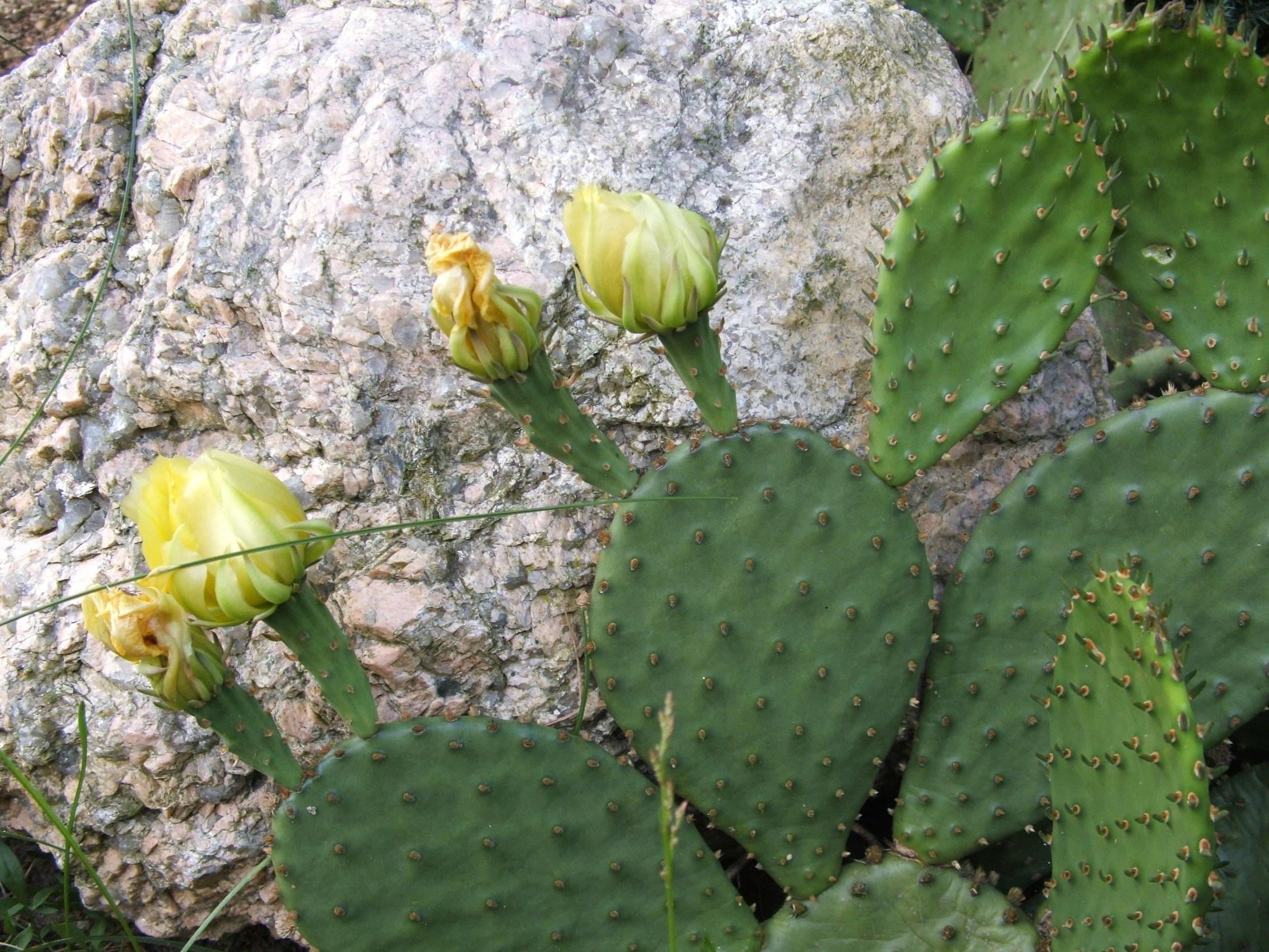 Winterharte subtropische pflanzen home for Winterharte pflanzen