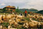 kıbrıscık köyünden bir görünüm