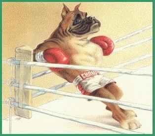 Picture Of Boxer Dog With Boxing Gloves