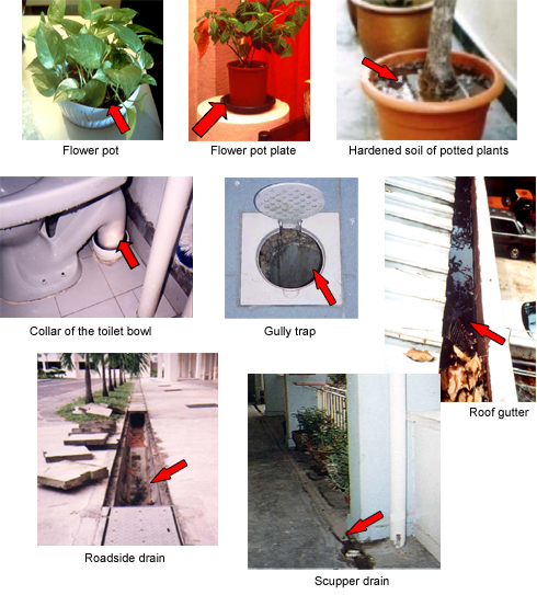 dengue fever and flower pots Barrels, buckets, flower vases or pots, old tires, cans and cisterns tips to reduce your risk of getting dengue fever by protecting yourselves from.