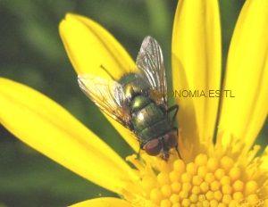 Entomofauna de diptera em área de proteção ambiental do maranhão 9