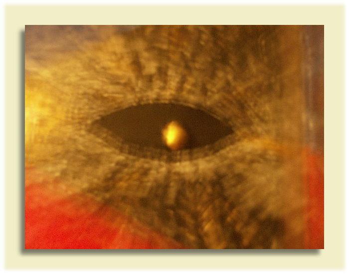 Kunstbilder - SEHE dich selbst und du siehst die Welt! - Creative & Copy - TIAN GREEN