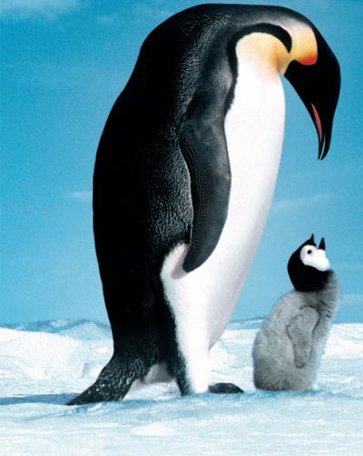 tiere gro223 amp klein pinguine