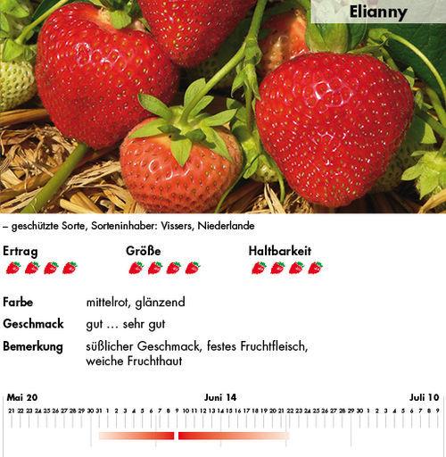 Prächtig Tomatenjahr #UX_36