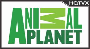 Watch Animal Planet EN