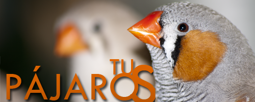 TusPajaros