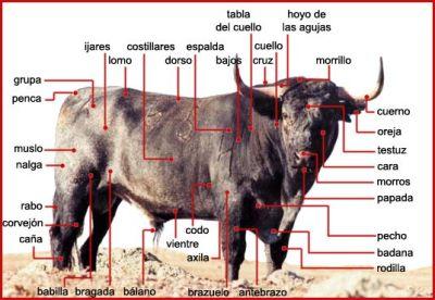 unat fiesta brava anatom237a del toro