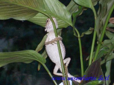 Josie hängt in der Pflanze