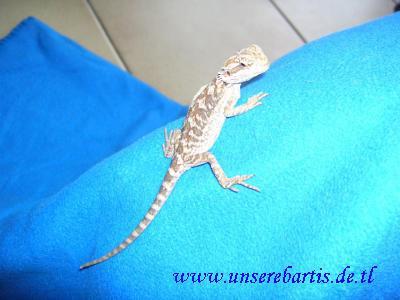 Josie auf blaue Decke