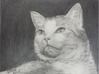 Dieses schöne Katzenportrait ist eine Auftagsarbeit, die heute, am 02.08.2015 gerade fertig wurde.