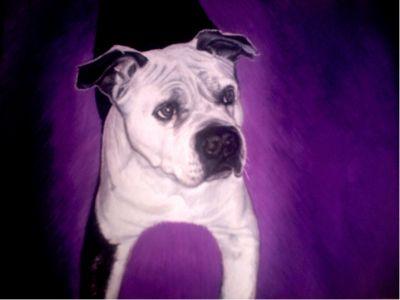gemalte Portraits, Hundeportrait, gemalt von Lisa Wenderoth, Künstler-Name