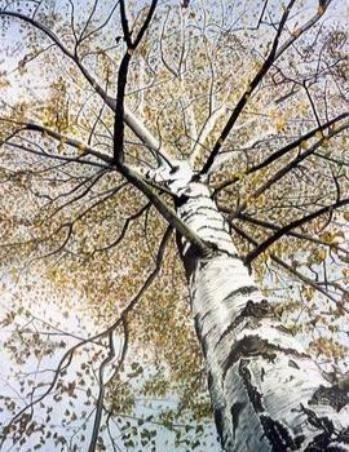 Die Birke, Aquarell, gemalt von Lissa Wenderoth, Güttingen, gelistet als r17