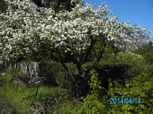 wilder garten apfelbaumbaum auf blumenwiese. Black Bedroom Furniture Sets. Home Design Ideas