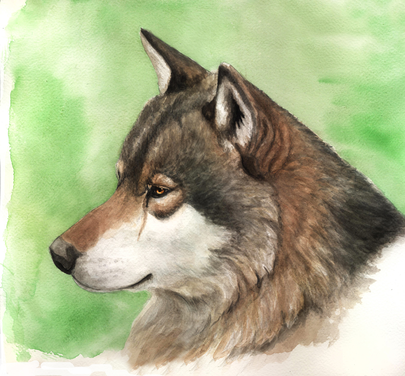 Wolfsportrait by Antonia Vogel