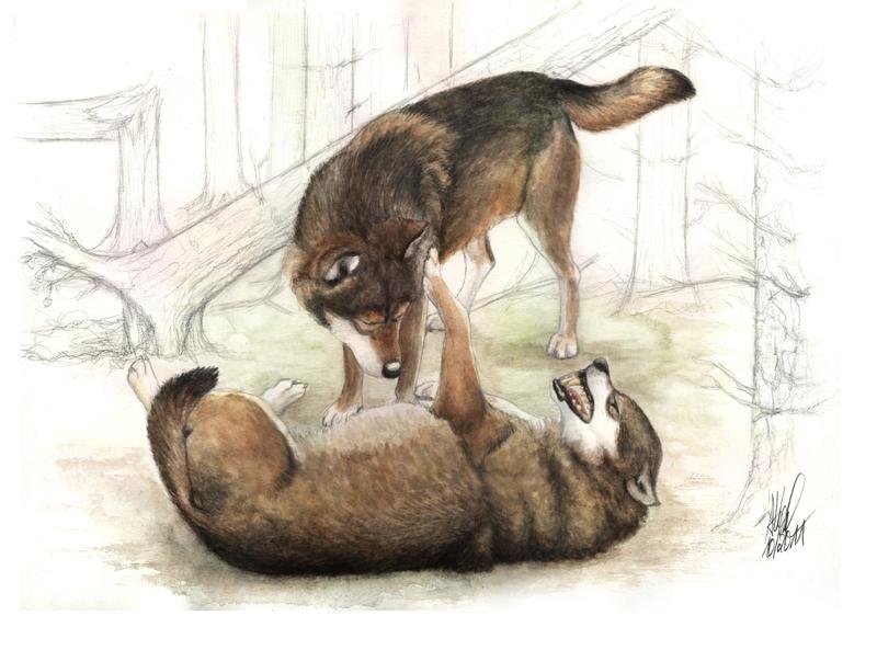 Wolfsverhalten by Antonia Vogel
