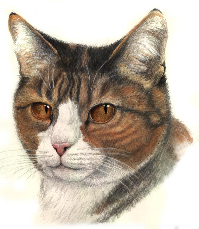 Katzenportrait by Antonia Vogel
