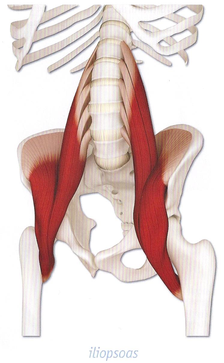 Info Seite - Anatomie