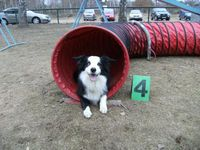 Agility Charly