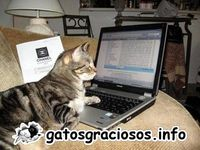 GATOS GRACIOSOS