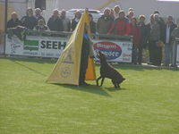 Dt. Meisterschaft Dobermann 12.10.08 Weigenheim