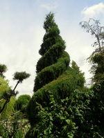 Stylizowane drzewko