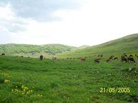 baş çiftlik
