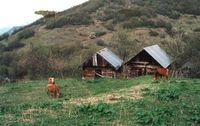 yenice evleri
