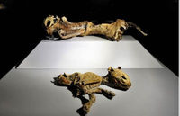 Mysterious Mummies-11,000 B.C.